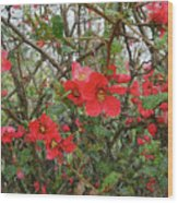 Blooms In The Alley Wood Print