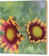 Blooms Of Color Wood Print