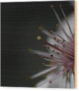 Blossom Angle Wood Print