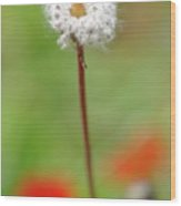 Blossom At Amatzia Forest -1 Wood Print