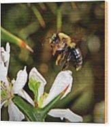 Blossom Hopping 002 Wood Print