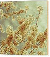 Sakura - Tinted Wood Print