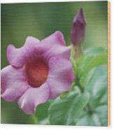 Blossom Of Allamanda Wood Print
