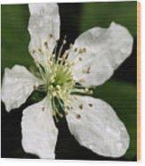 Blossom Square Wood Print