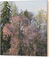 Blossom Tree Impressionist Wood Print