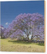 Blossoming Jacaranda Wood Print