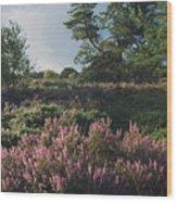 Blossoming Jutlandic Heath  Wood Print