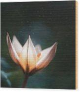 Blossoming Light Wood Print
