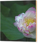Blossoming Lotus Flower Closeup Wood Print