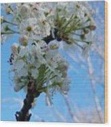 Blossoming Pear Wood Print