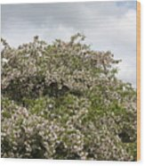 Blossoming Tree Wood Print