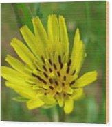 Blossoming Yellow Goatsbeard Wood Print