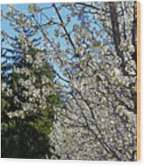 Blossoms And The Bard Wood Print