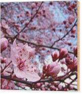 Blossoms Art Blue Sky Spring Tree Blossoms Pink Giclee Baslee Troutman Wood Print