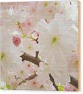Blossoms Art Print 53 Sunlit Pink Tree Blossoms Macro Springtime Blue Sky  Wood Print