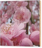 Blossoms Art Print Pink Spring Blossom Baslee Troutman Wood Print