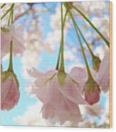 Blossoms Art Prints 52 Pink Tree Blossoms Nature Art Blue Sky Wood Print