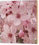 Blossoms Art Prints 63 Pink Blossoms Spring Tree Blossoms Wood Print