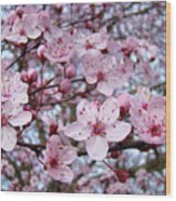 Blossoms Art Prints Nature Pink Tree Blossoms Baslee Troutman Wood Print