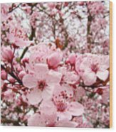 Blossoms Art Spring Pink Tree Blossom Floral Baslee Troutman Wood Print