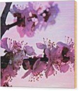 Blossoms At Sunset Wood Print