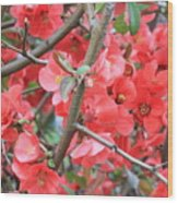 Blossoms Branches And Thorns Wood Print