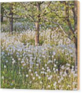 Blossoms Growing In A Fruit Orchard In Wood Print