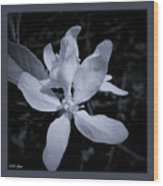 Blossoms In Black And White Wood Print