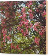 Blossoms In The Shanendoahs Wood Print