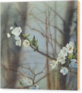 Blossoms In The Wild Wood Print