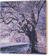 Blossoms In Winter Wood Print