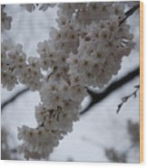 Blossoms Of Dc Wood Print