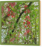 Blossoms Of Spring Time Wood Print