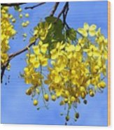 Blossoms Of The Golden Chain Tree Wood Print