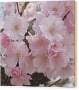 Blossoms On Bark Wood Print