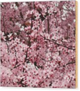 Blossoms Pink Tree Blossoms Giclee Prints Baslee Troutman Wood Print
