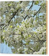 Blossoms Whtie Tree Blossoms 29 Nature Art Prints Spring Art Wood Print