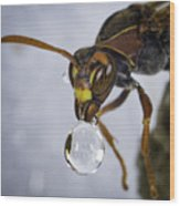 Blowing Bubbles Wood Print