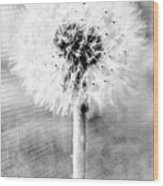 Blowing In The Wind Pencil Effect Wood Print