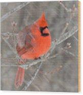 Blowing Snow Cardinal Wood Print
