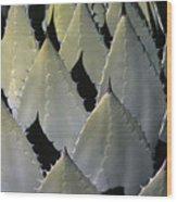 Blue Agave Cactus Wood Print