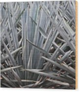 Blue Agave  Tequila Mexico  Wood Print
