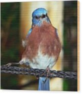 Blue And Brown Tanager Wood Print