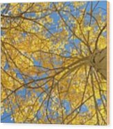 Blue And Gold II Wood Print