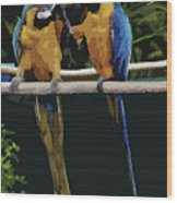 Blue And Gold Macaw 1 Wood Print