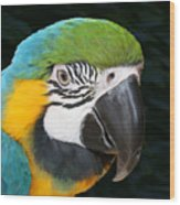 Blue And Gold Macaw Freehand Painting Square Format Wood Print