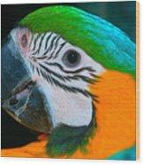 Blue And Gold Macaw Headshot Wood Print