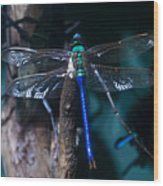 Blue And Green Dragonfly Wood Print