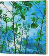 Nature's Gifts Of Blue And Green Wood Print