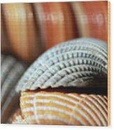 Blue And Orange Seashells Wood Print